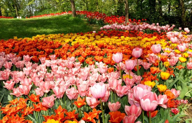 castello di pralormo messer tulipano