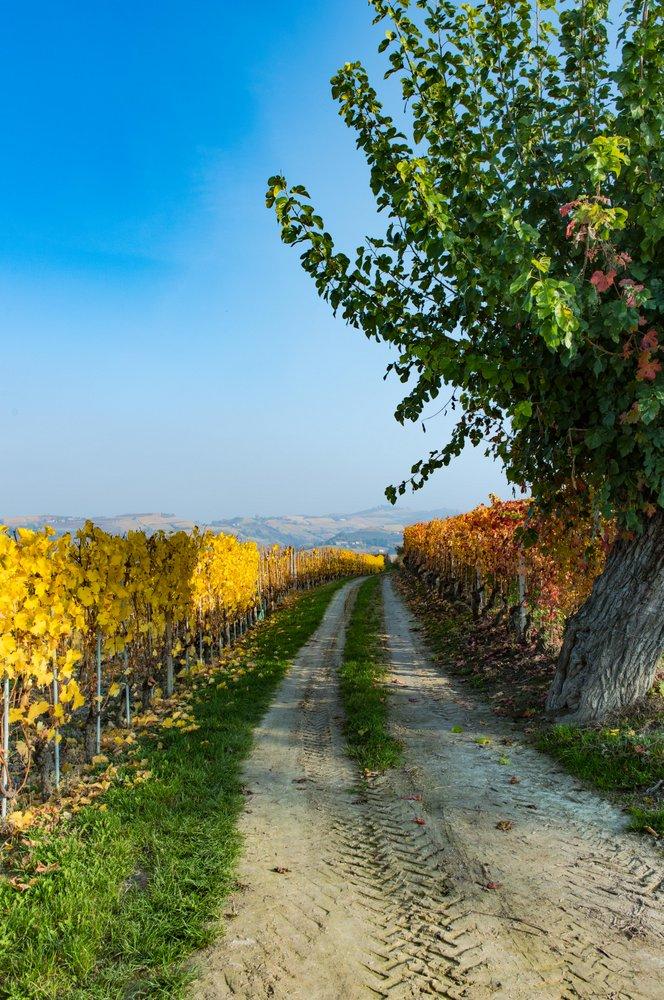 Photo by: Valter Abba. Foliage in Langhe e Roero. La magia dell'autunno.